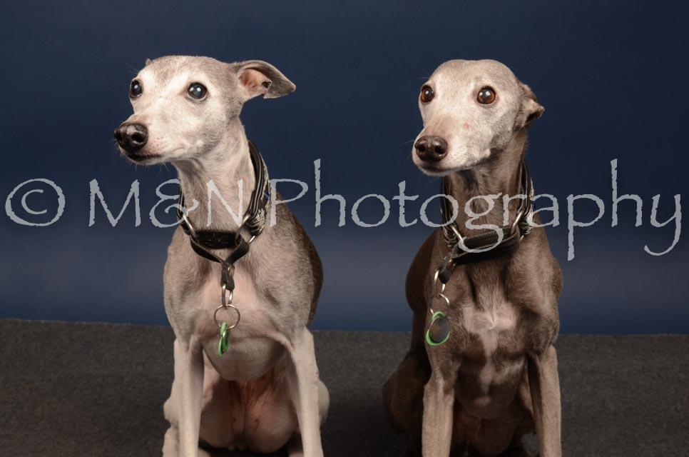 M&N Photography -DSC_4601