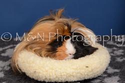M&N Photography -DSC_5338
