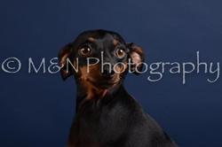 M&N Photography -DSC_3814