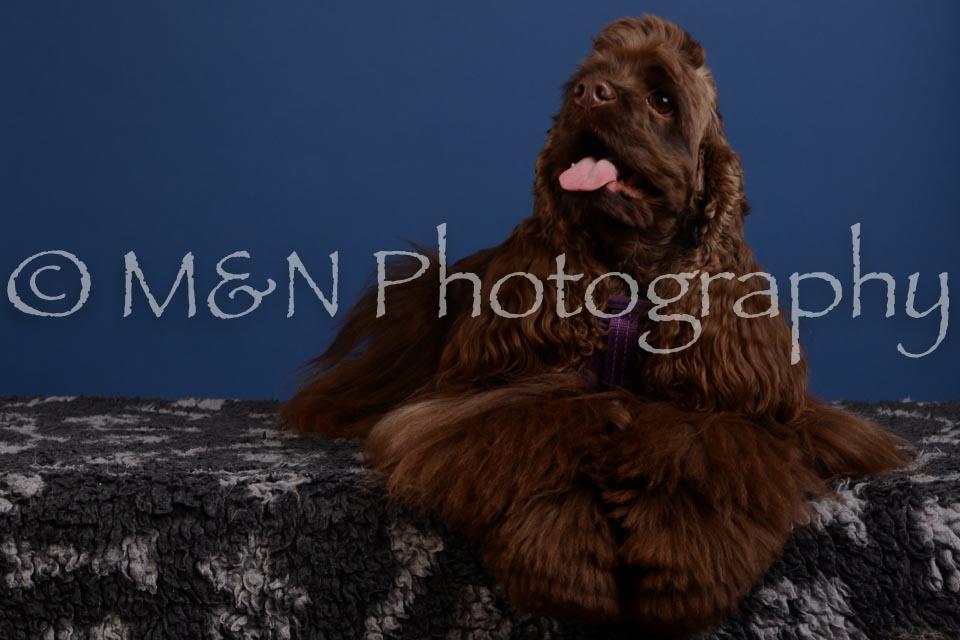 M&N Photography -DSC_4921