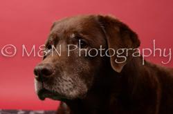 M&N Photography -DSC_6625