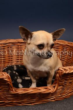 M&N Photography -DSC_4565