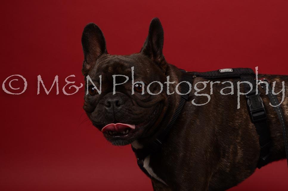 M&N Photography -DSC_6769