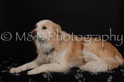 M&N Photography -DSC_5694