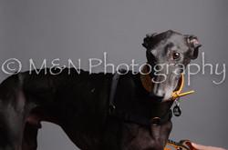 M&N Photography -DSC_2931