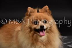 M&N Photography -DSC_2596