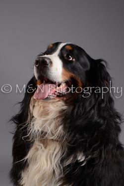 M&N Photography -DSC_1483