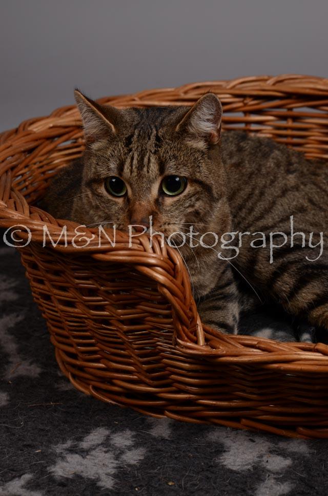 M&N Photography -DSC_2947