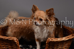 M&N Photography -DSC_1819