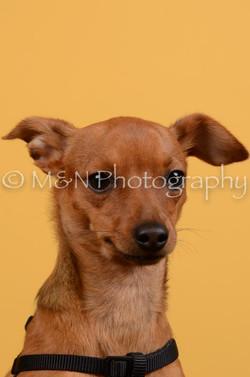 M&N Photography -DSC_4594