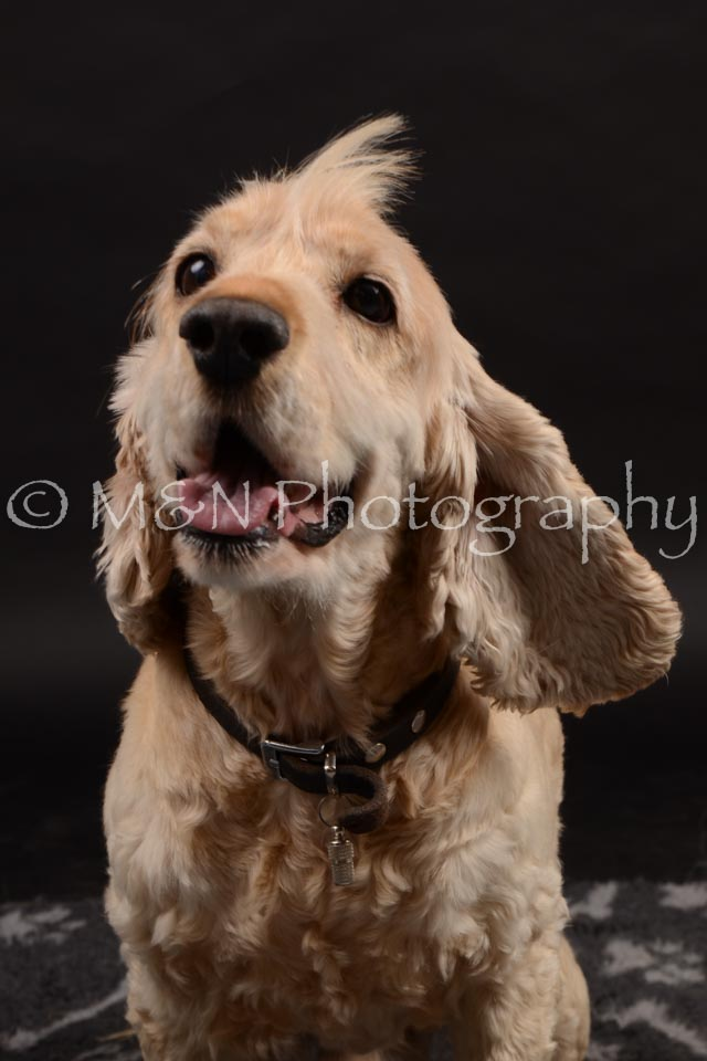 M&N Photography -DSC_0216