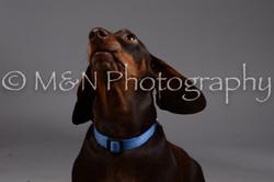 M&N Photography -DSC_2012