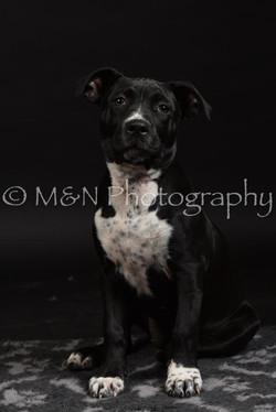 M&N Photography -DSC_2657