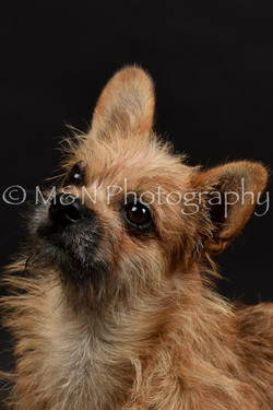 M&N Photography -DSC_2539