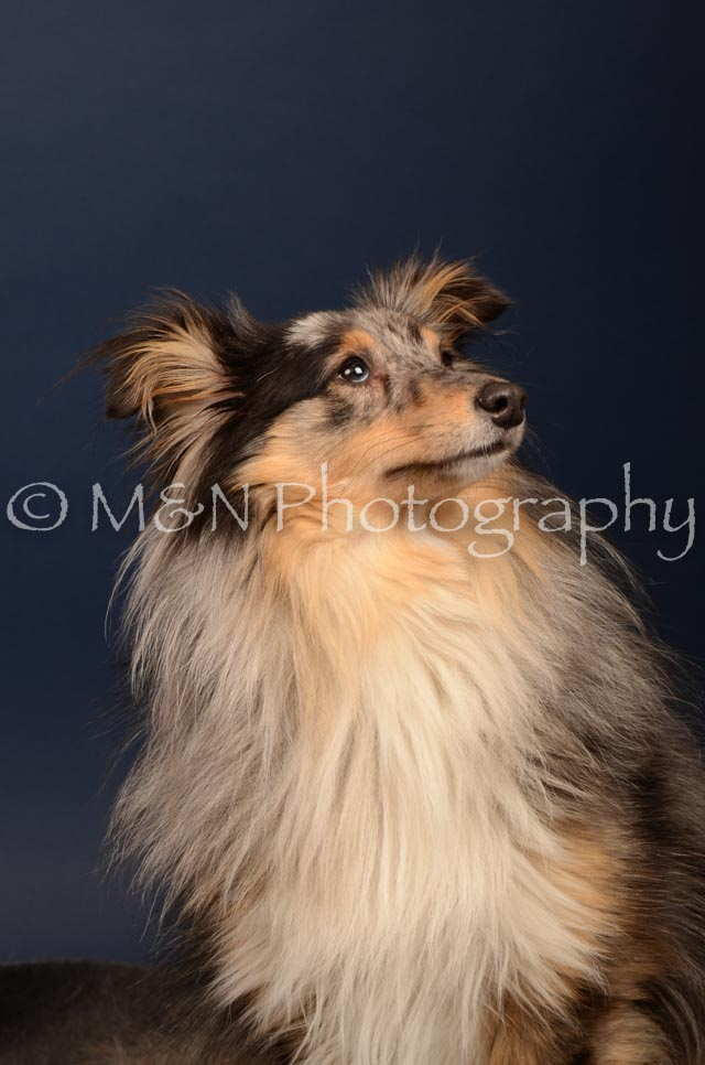 M&N Photography -DSC_4446