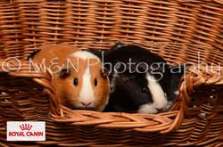 M&N Photography -DSC_4742-2