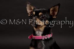 M&N Photography -DSC_0131
