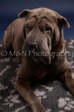 M&N Photography -DSC_0292