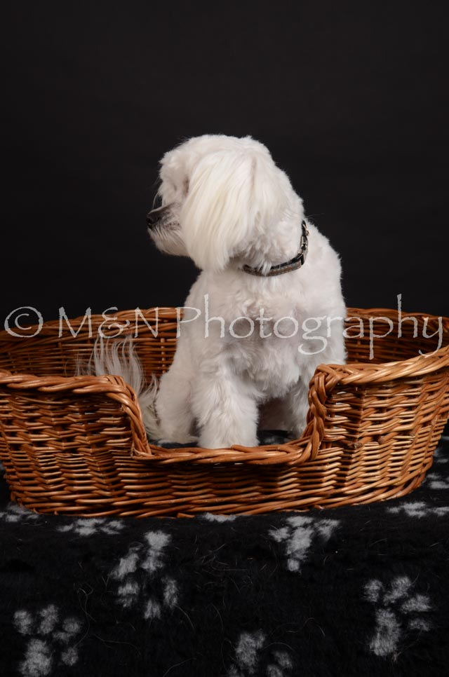 M&N Photography -DSC_5529