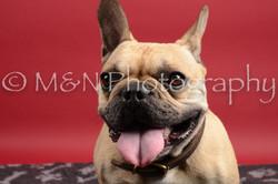 M&N Photography -DSC_8484
