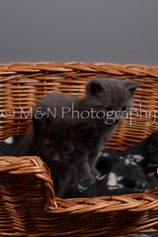M&N Photography -DSC_2371