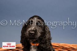 M&N Photography -DSC_4271-2
