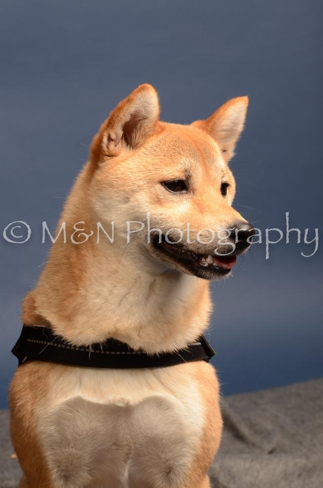 M&N Photography -DSC_4322