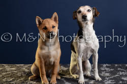 M&N Photography -DSC_3800