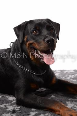 M&N Photography -DSC_8910
