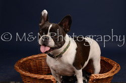 M&N Photography -DSC_0680