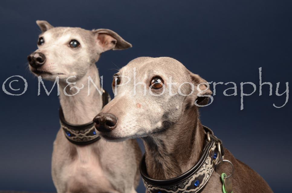 M&N Photography -DSC_4607