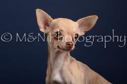 M&N Photography -DSC_4198