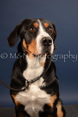 M&N Photography -DSC_4426