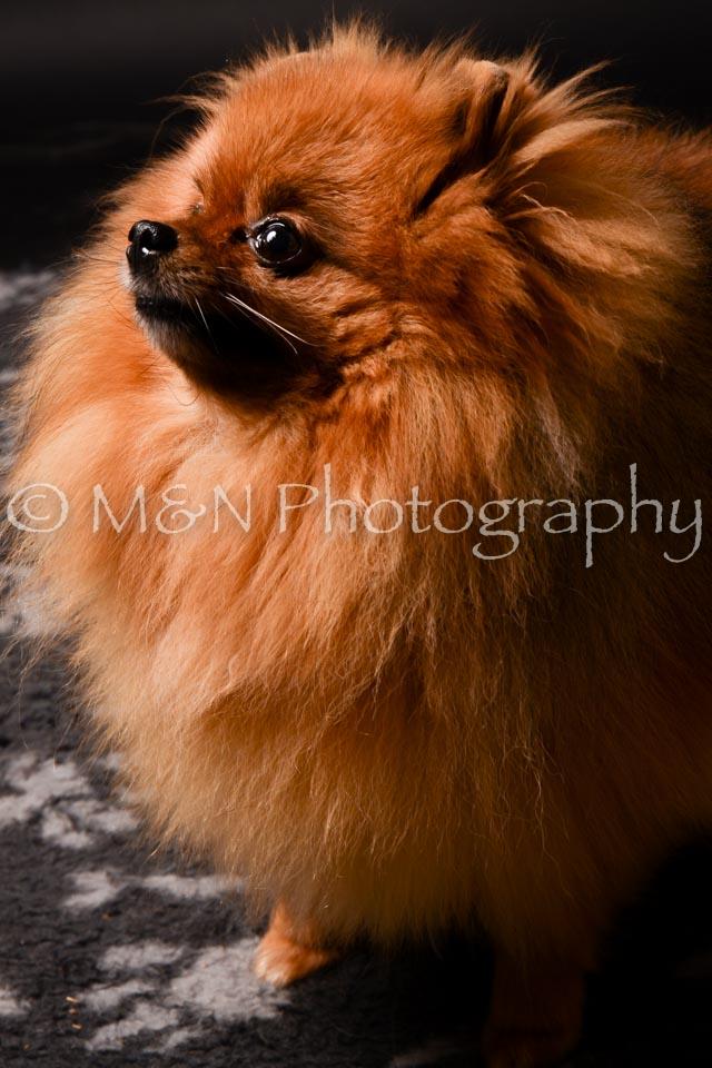 M&N Photography -DSC_0176