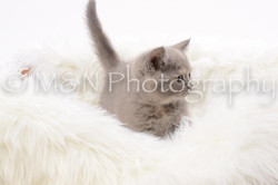 M&N Photography -DSC_8842
