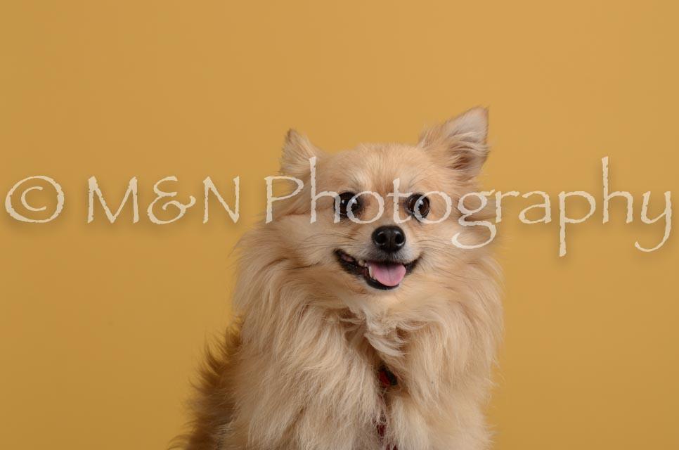M&N Photography -DSC_4829