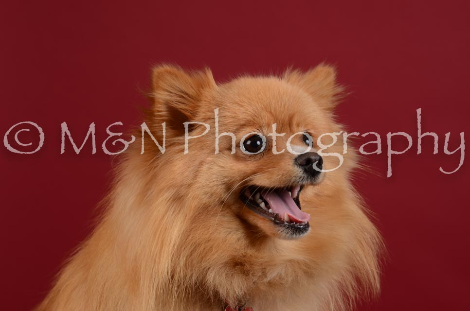 M&N Photography -DSC_3309