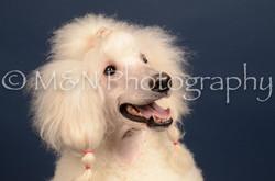 M&N Photography -DSC_3847