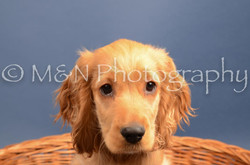 M&N Photography -DSC_4282