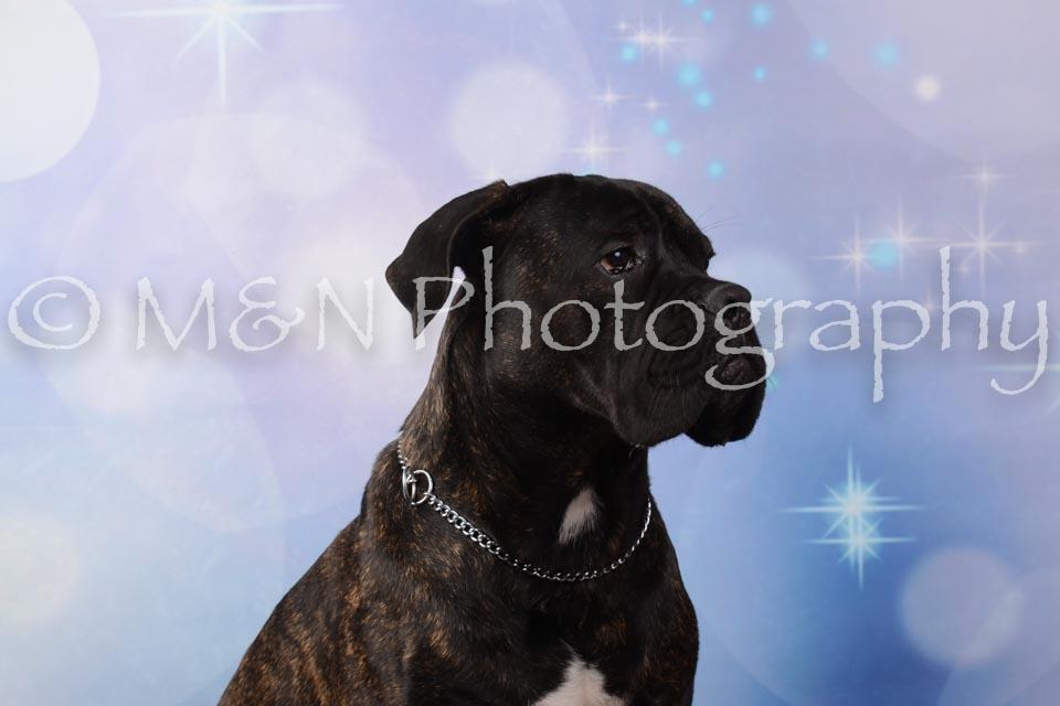 M&N Photography -DSC_6808