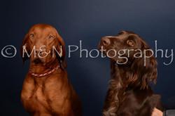 M&N Photography -DSC_4544