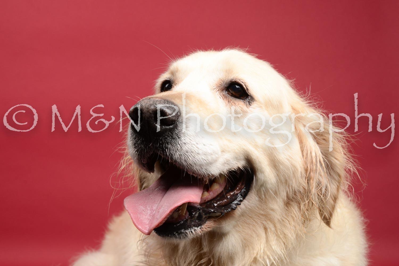 M&N Photography -DSC_8429