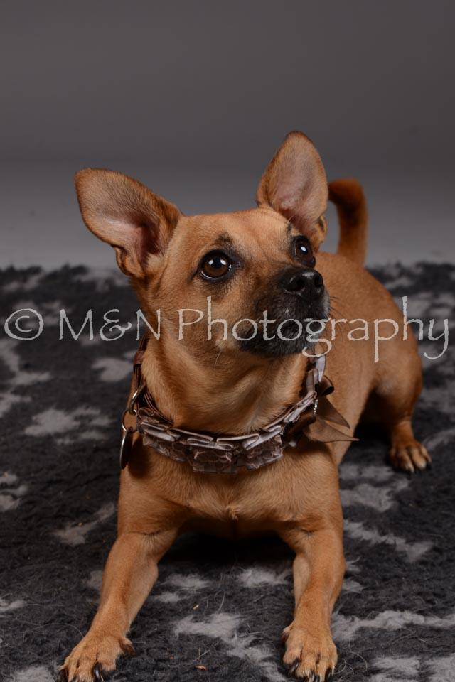 M&N Photography -DSC_2232