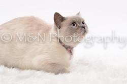 M&N Photography -DSC_8788