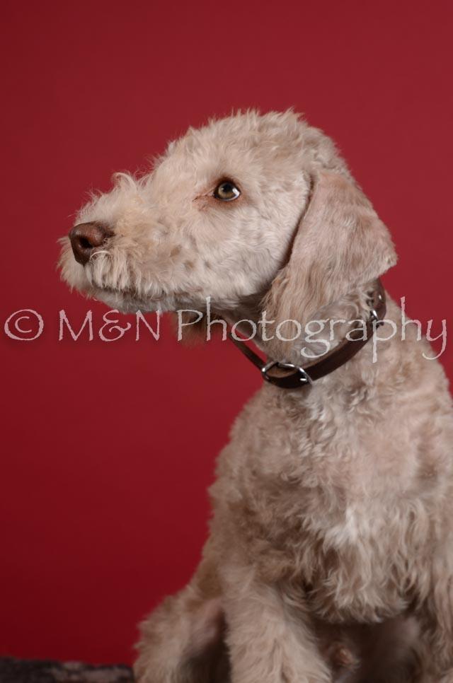 M&N Photography -DSC_3775
