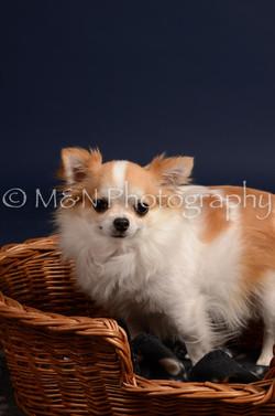 M&N Photography -DSC_0589