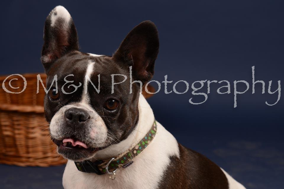 M&N Photography -DSC_0682