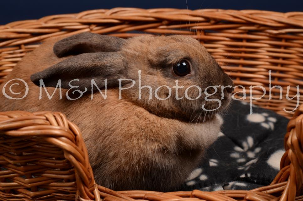 M&N Photography -DSC_0765