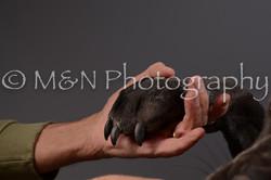 M&N Photography -DSC_2172