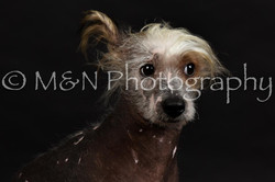 M&N Photography -DSC_2493